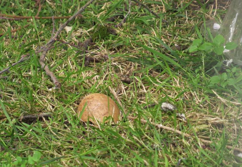 IMG_4899-eggshell
